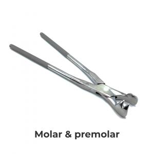 molar premolar category tab et mobile